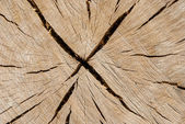Oak log surface as background — Stock Photo