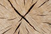 Oak log surface as background — Stock Photo