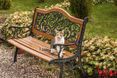 Cat on a garden bench — Stock Photo