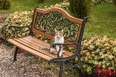 Cat on a garden bench — Stock Photo