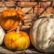 Different types of pumpkins — Stock Photo