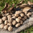 Freshly picked walnuts — Stock Photo