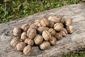 Freshly picked walnuts — Stockfoto