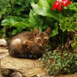 Tabby cat in garden — Stock Photo