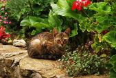 Tabby cat in garden — Stock Photo