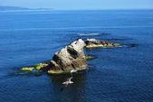 Вид на море с рок и Чайка — Стоковое фото
