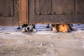Dogs looking under gate — Stockfoto