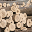 Stock Photo: Cut poplar logs
