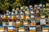Colored beehives on slope — Stock Photo