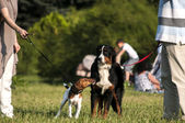 Two dogs on leashes in park — Stock Photo
