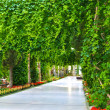 Green park alley on a sea shore - Stock Photo