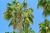 Island Paradise - Palm trees — Stock Photo