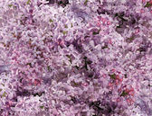 Small pink flowers background — Stock Photo