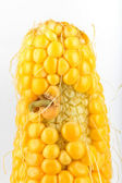A worm eating the corn — Stock Photo