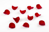 Rose petals isolated on white — Stock Photo