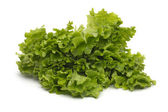 Selection of fresh mixed green salad leaves — Stock Photo