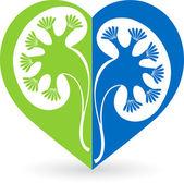 Kidney logo — Stock Vector