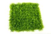квадрат зеленая трава — Стоковое фото