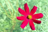 Leylak çiçeği yeşil arka plan üzerinde — Stok fotoğraf