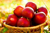 Red apples in wicker basket — Stock Photo