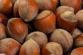 Ripe whole hazelnuts — Zdjęcie stockowe