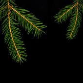 Weihnachten fichte zweig — Stockfoto