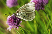 Beautiful butterfly on summer flowers — Stock Photo