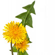 Yellow dandelion flower — Stock Photo #41012011