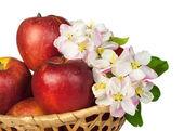 Czerwone jabłka i kwiaty — Zdjęcie stockowe