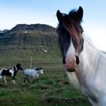 Iceland — Stock Photo #13345112
