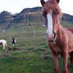 Iceland — Stock Photo #13345542
