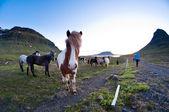 Islandia — Foto de Stock