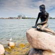 little mermaind statue in copenhagen — Stock Photo