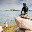 Little mermaind statue in copenhagen - Stockfoto