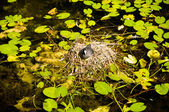 Water bird nest — Stock Photo