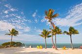 Sommaren scenen färgglada stolar och palmer på en tropisk strand i florida — Stockfoto