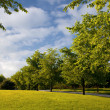 Beautiful nature in public park with green grass — Stock Photo