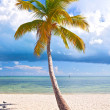 Summer at a tropical paradise in Florida Keys USA — Stock Photo #38919185