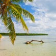 Summer at a tropical paradise in Florida Keys USA — Stock Photo #38919327