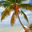 Summer at a tropical paradise in Florida Keys USA — Stock Photo #38919359