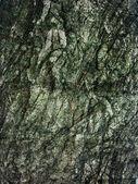 Ursprungliga trä textur — Stockfoto