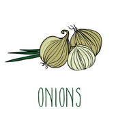 Vector image of onions — Stock Vector