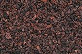 Cacao nibs — Stock Photo