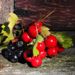 Viburnum berries and black mountain ash — Stock Photo