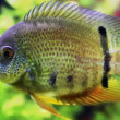 Stock Video: Aquarium fish