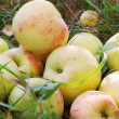 Stock Photo: Fresh apples in grass