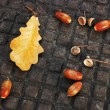 Stock Photo: Oak leaf and acorns