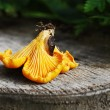 Stock Photo: Chanterelle