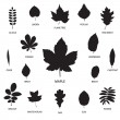 Royalty-Free Stock Vector Image: Vector collection of leaf silhouettes