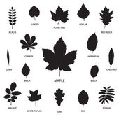 Vector collection of leaf silhouettes — Stock Vector